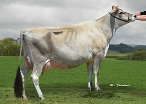 Daughter: Thornlea Goas Tansy Ex2, Thornlea Jerseys, Waverley